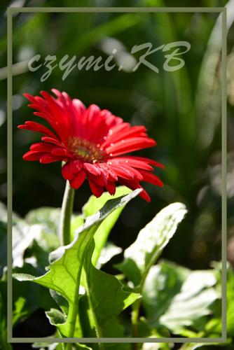 k.kwiat13a